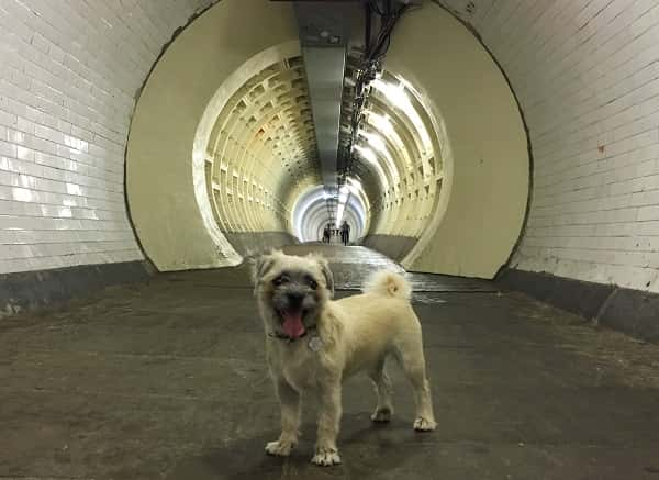 Frank is inside the Greenwich Foot Tuunel